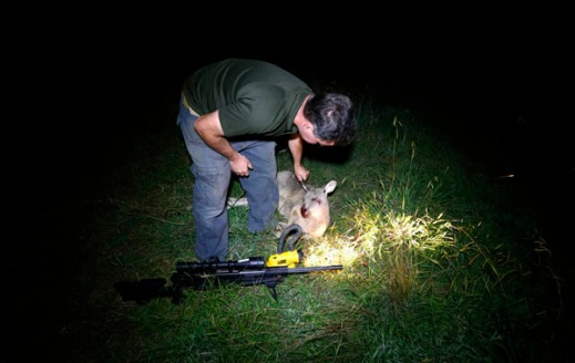Kangaroo shooter Steven O'Donnell prepares to tag a kangaroo he recently shot next to his .223 calibre rifle in a paddock on a property located on the outskirts of Australia's capital city Canberra March 23, 2013. O'Donnell, a professional plumber, shoots kangaroos on local farmer's properties around three times a week as part of the annual cull, running from March until the end of July, which involves the legal shooting and tagging of thousands of eastern grey kangaroos per year in the Australian Capital Territory. Picture taken March 23, 2013. REUTERS/David Gray (AUSTRALIA)