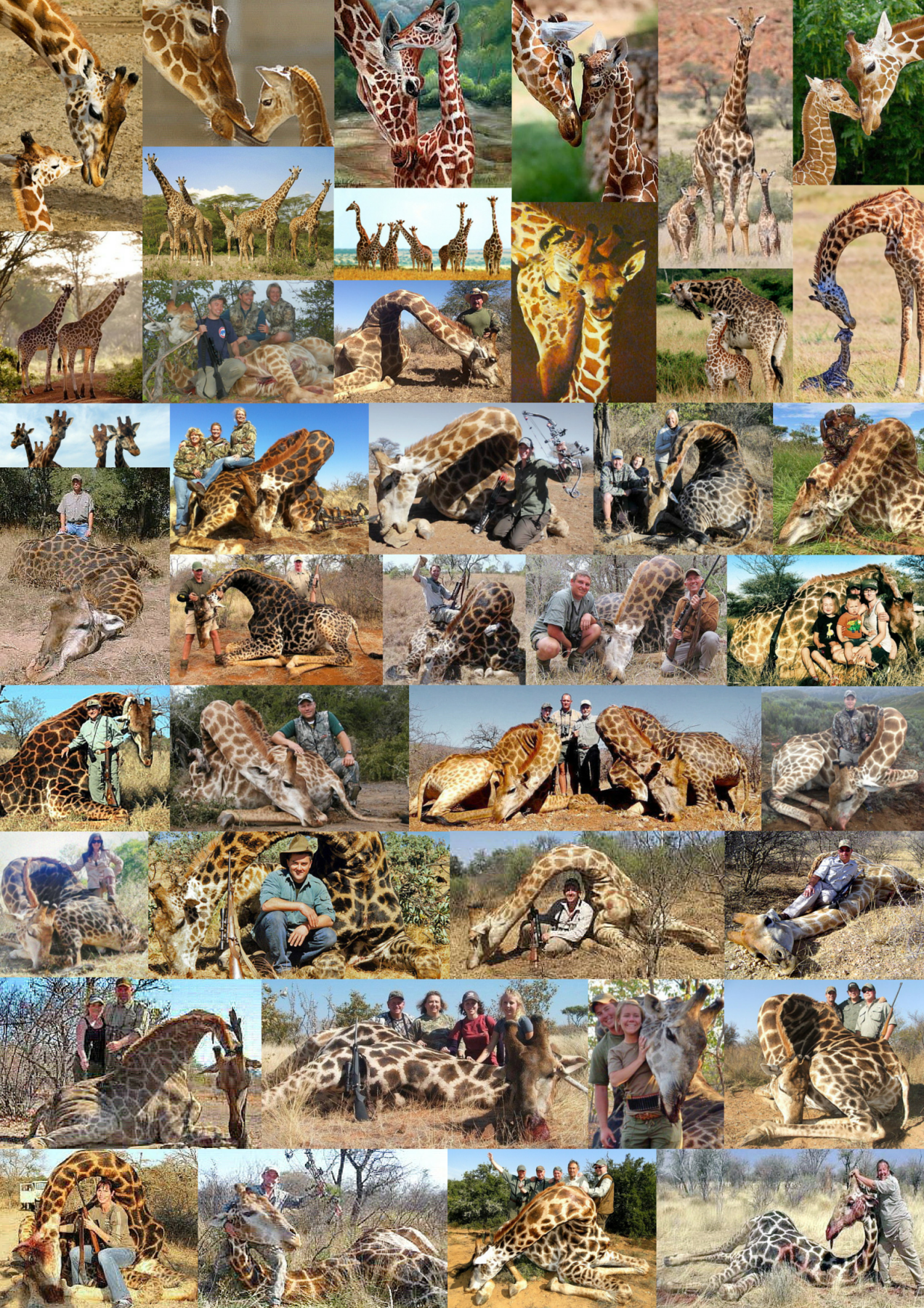 trophy-hunters-comp-giraffes